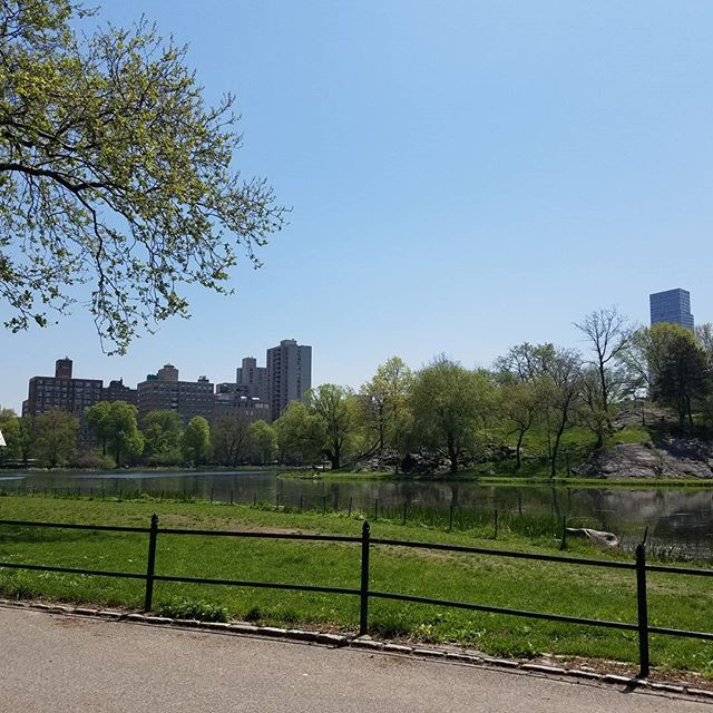 Views of the Harlem Meer in Central Park on a warm sunny day. #CentralPark #Harlem #harlemviews