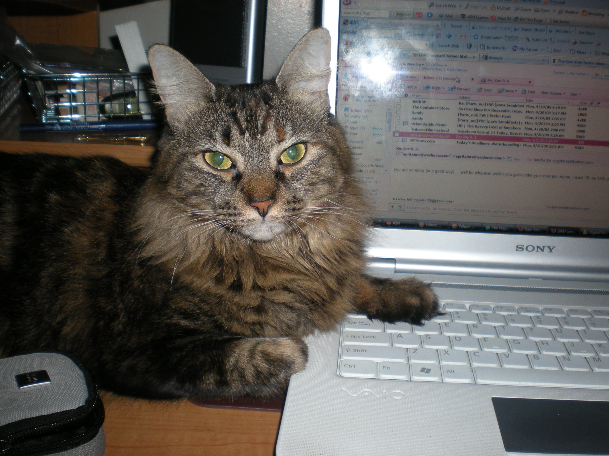 Callie hard at work on my laptop…