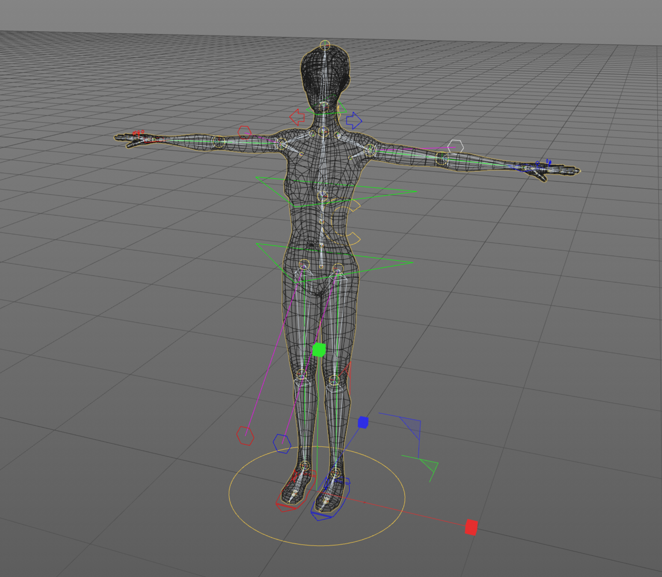Meshed_Rig.png