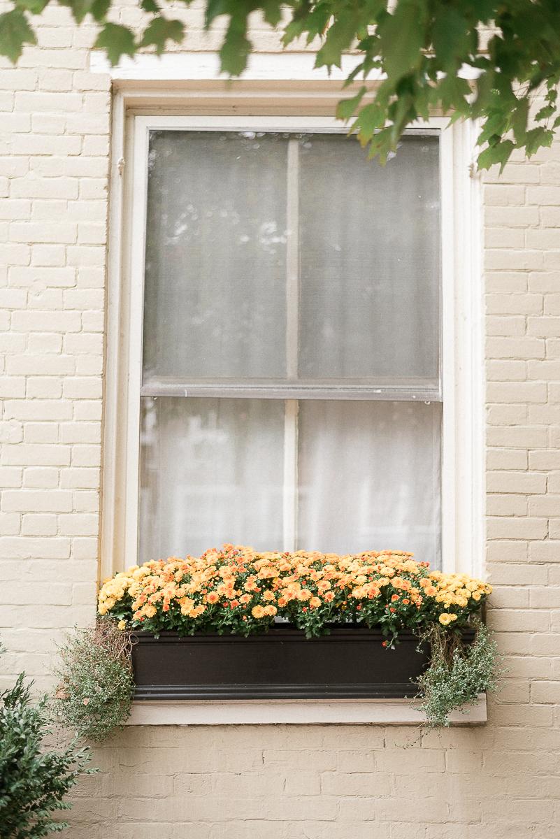 VA-Old-Town-Alexandria-Fall-Engagement-3.jpg