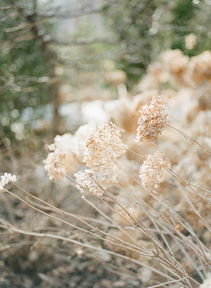 MD-Engagement-Brookside-Garden-Winter-Sunset-Session-6.jpg