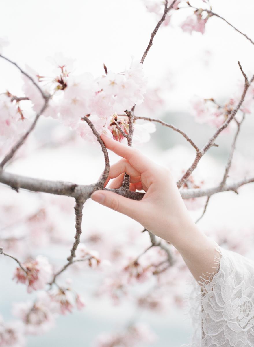 DC-Engagement-Cherry-Blossom-Tidal-Basin-24.jpg