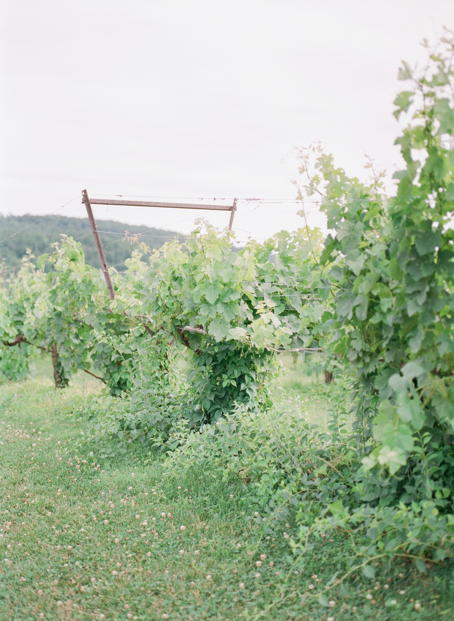 VA-Breaux-Vineyards-Summer-Wedding-Dusty-Blue-40.jpg