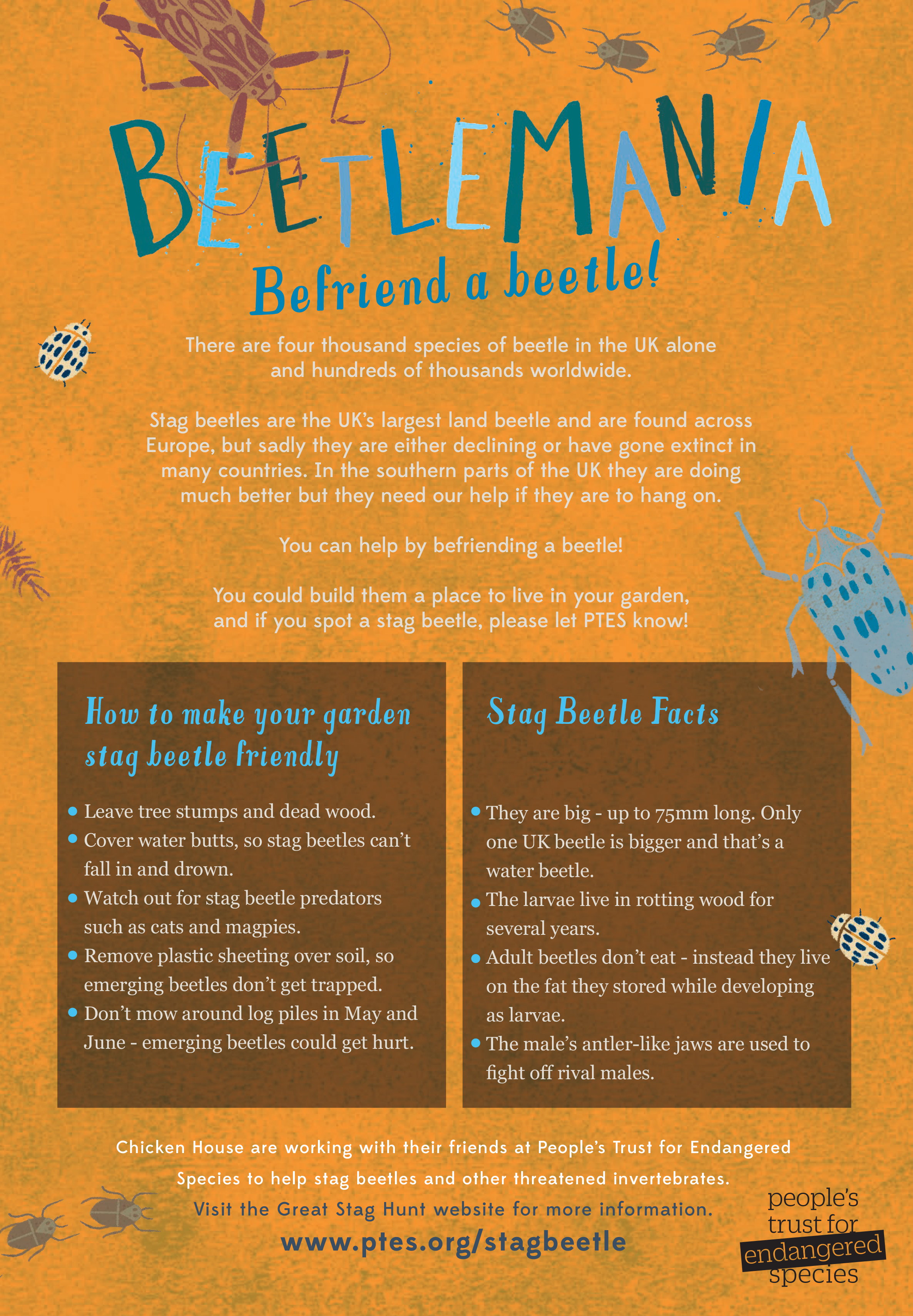 CLICK to learn how to befriend a beetle.