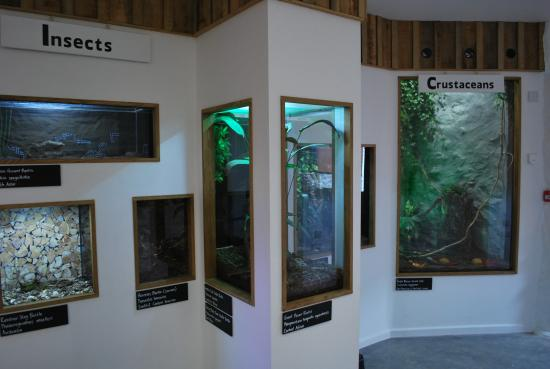 the-tropical-bug-zoo.jpg