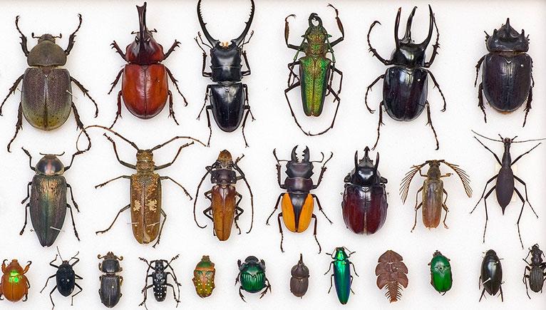 variety-beetle-specimens-calendar.jpg