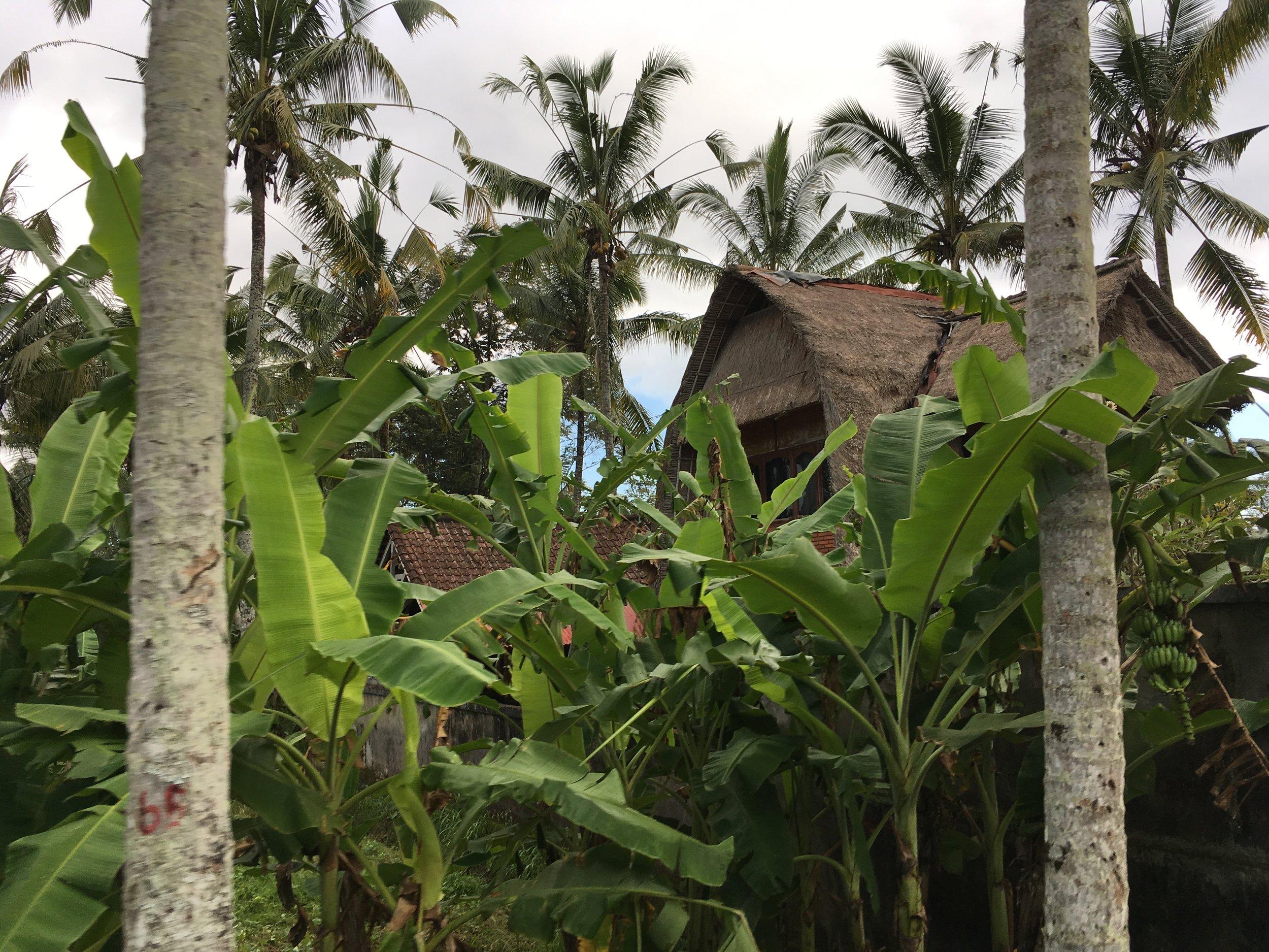 A photo of Bali, taken on the bike