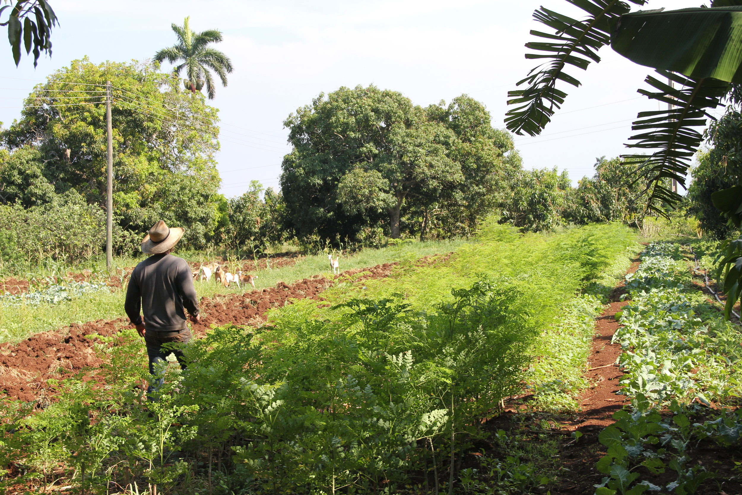 IN THE FIELD: sustainable agriculture in cuba - Experience Cuba from the ground up!Get your hands dirty alongside farmers and scientists while exploring the island's rich history, food, and culture.From farmers' markets to permaculture projects, you'll get to know Cuba from root to leaf.