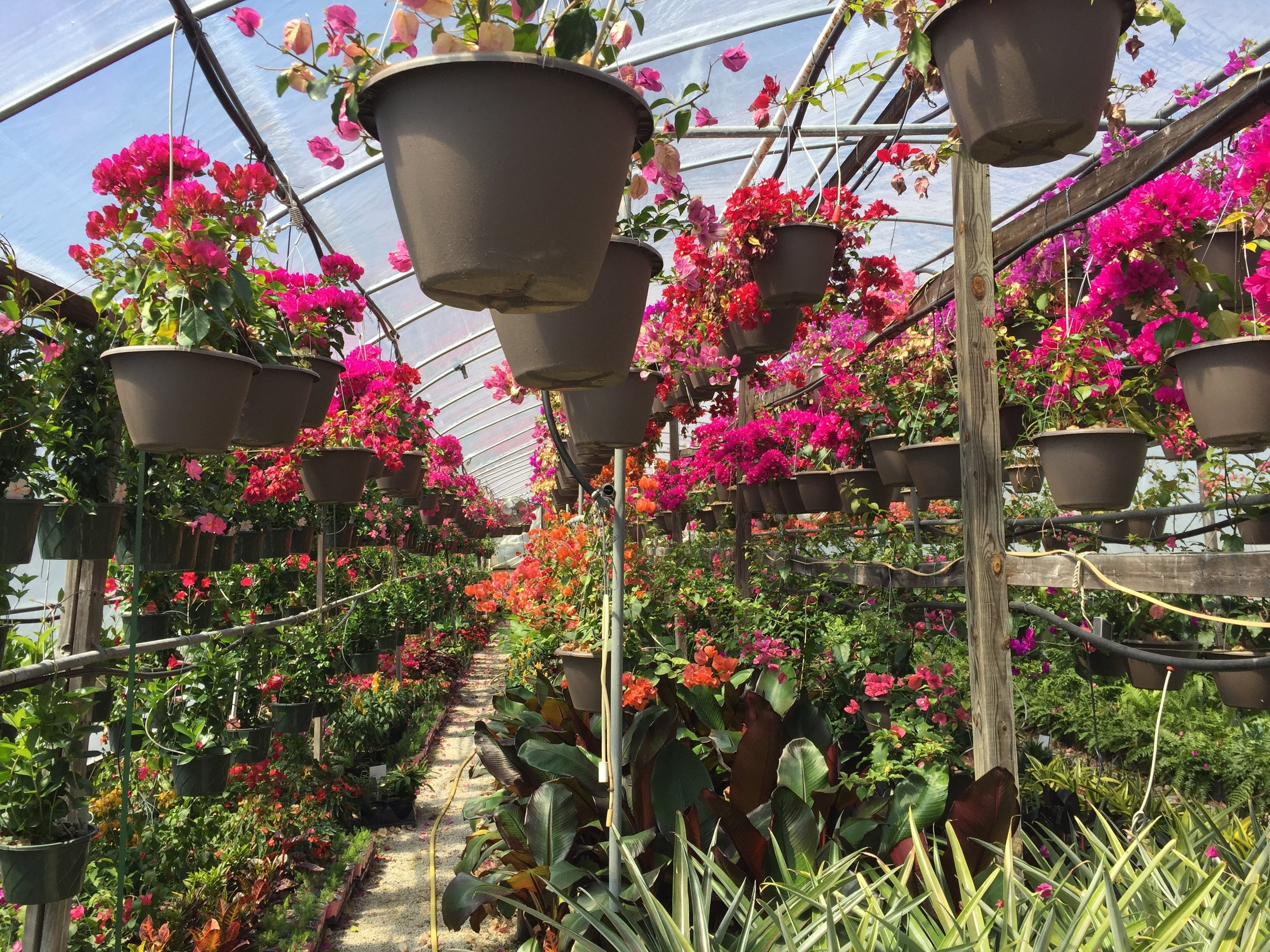 My new happy place: Gunter's Greenhouse in Durham, NC