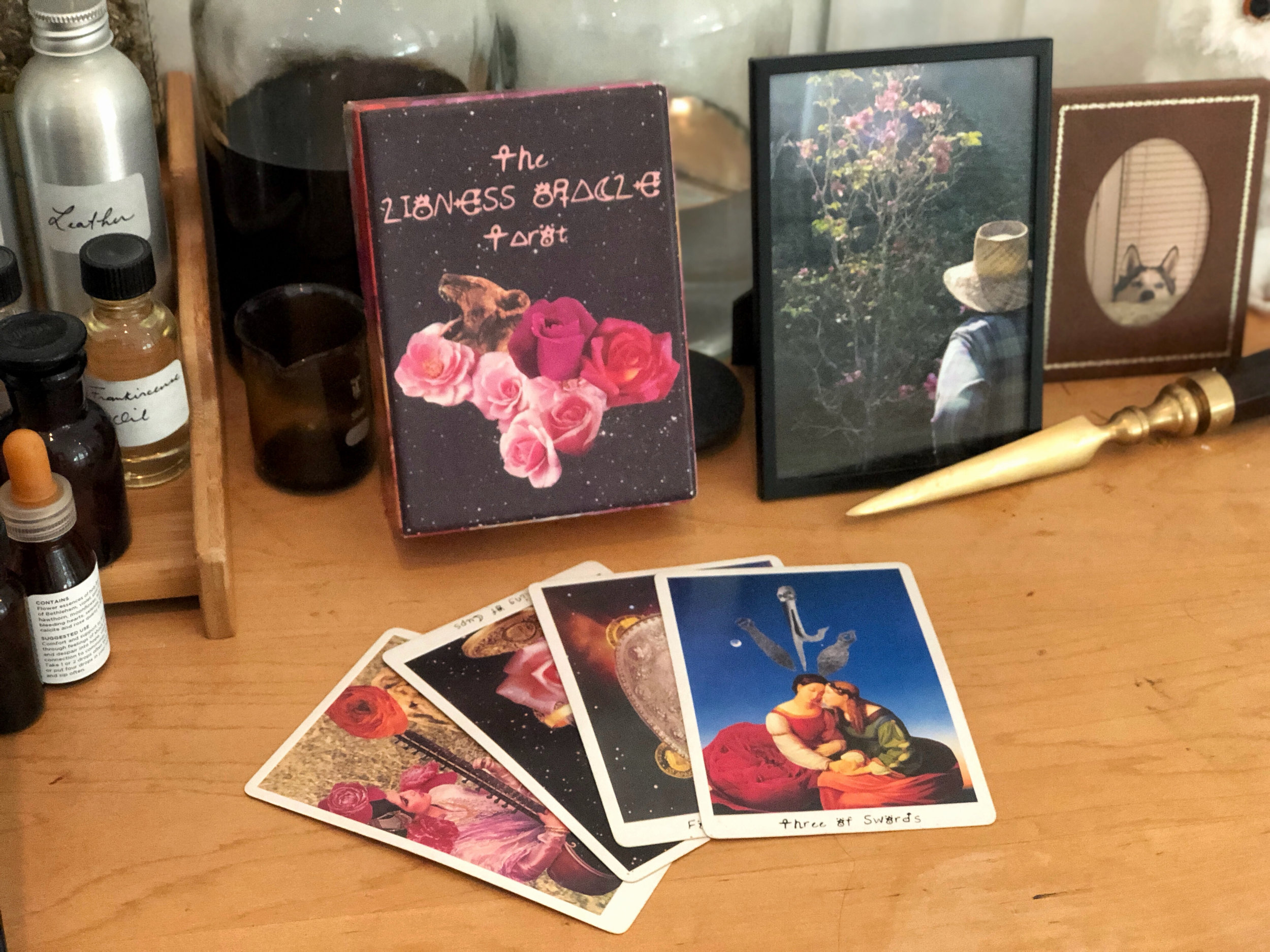 My latest second-hand tarot find: The Lioness Oracle Tarot