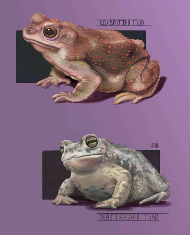 The Beginning of Toad's Conception.