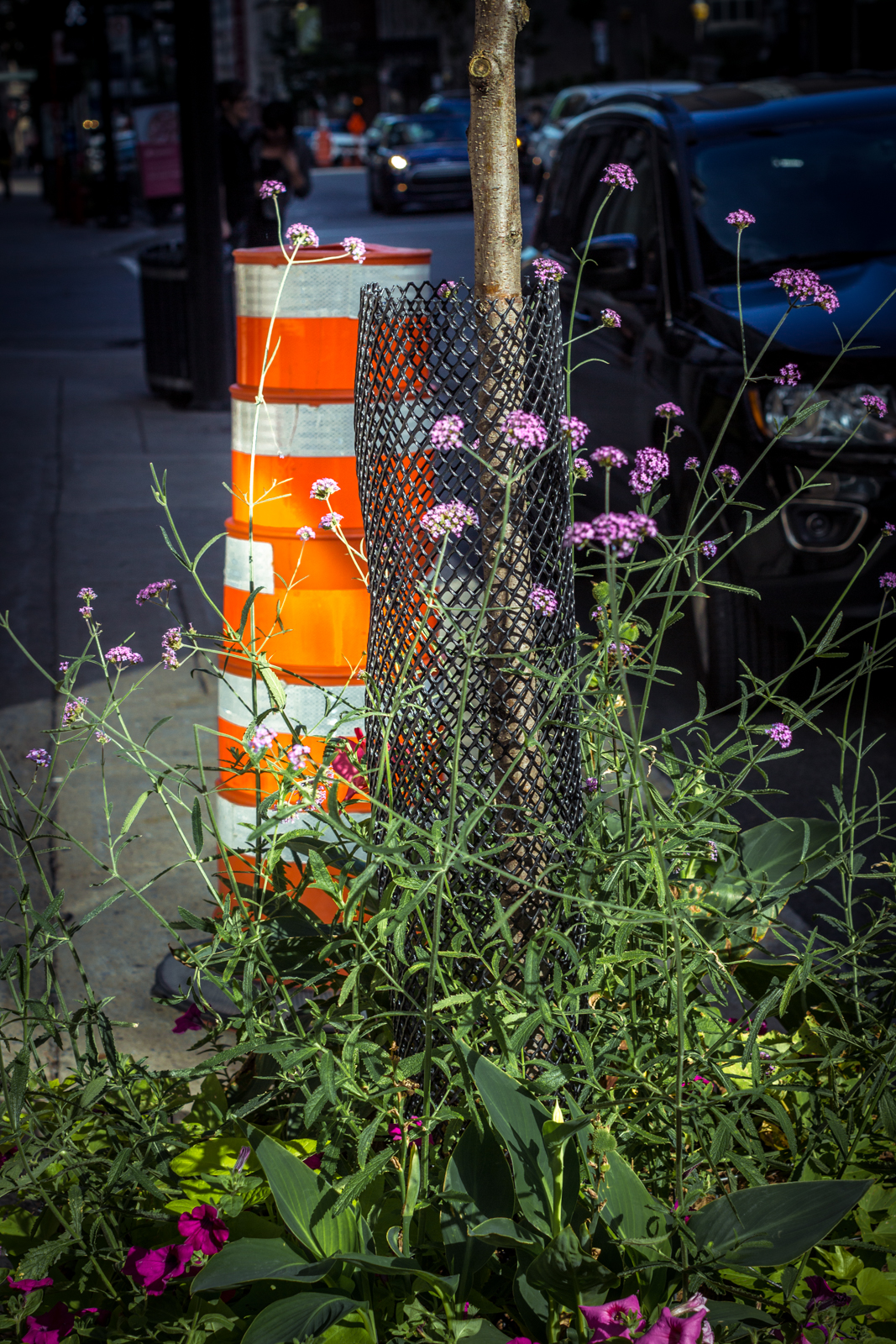 Beauty and the beast. The city is filled with beautiful flowers, but unfortunately, the constant construction seems to spoil these efforts all too many times.