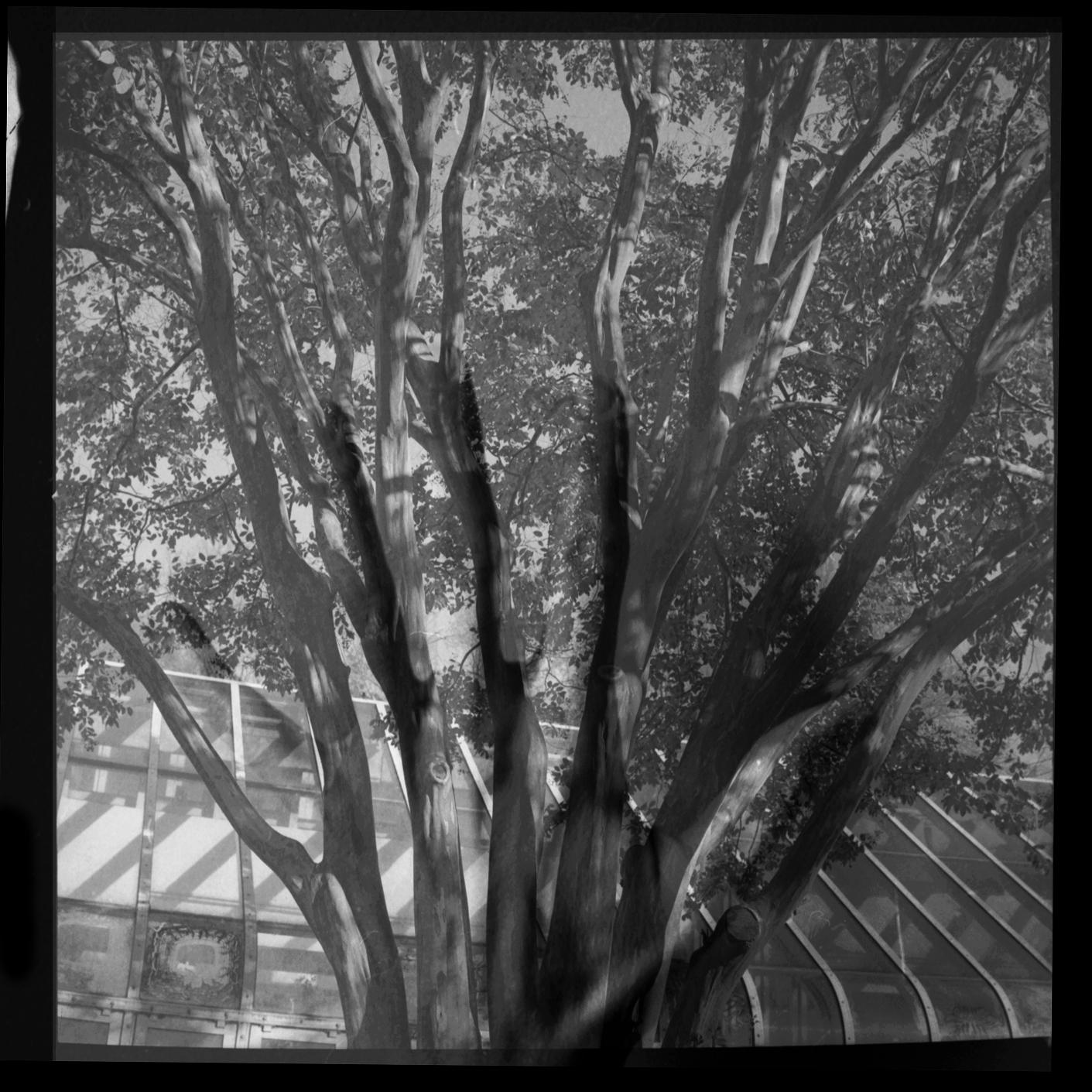 treehand_edited-1.jpg