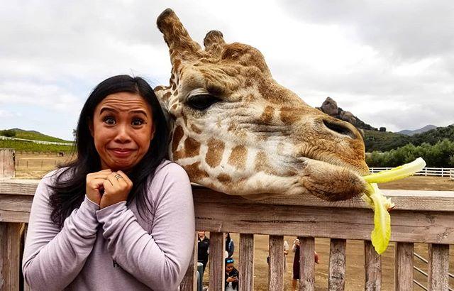 Happy birthday @karissaysonmba ❤ hanging with #stanleythegiraffe @malibusafaris