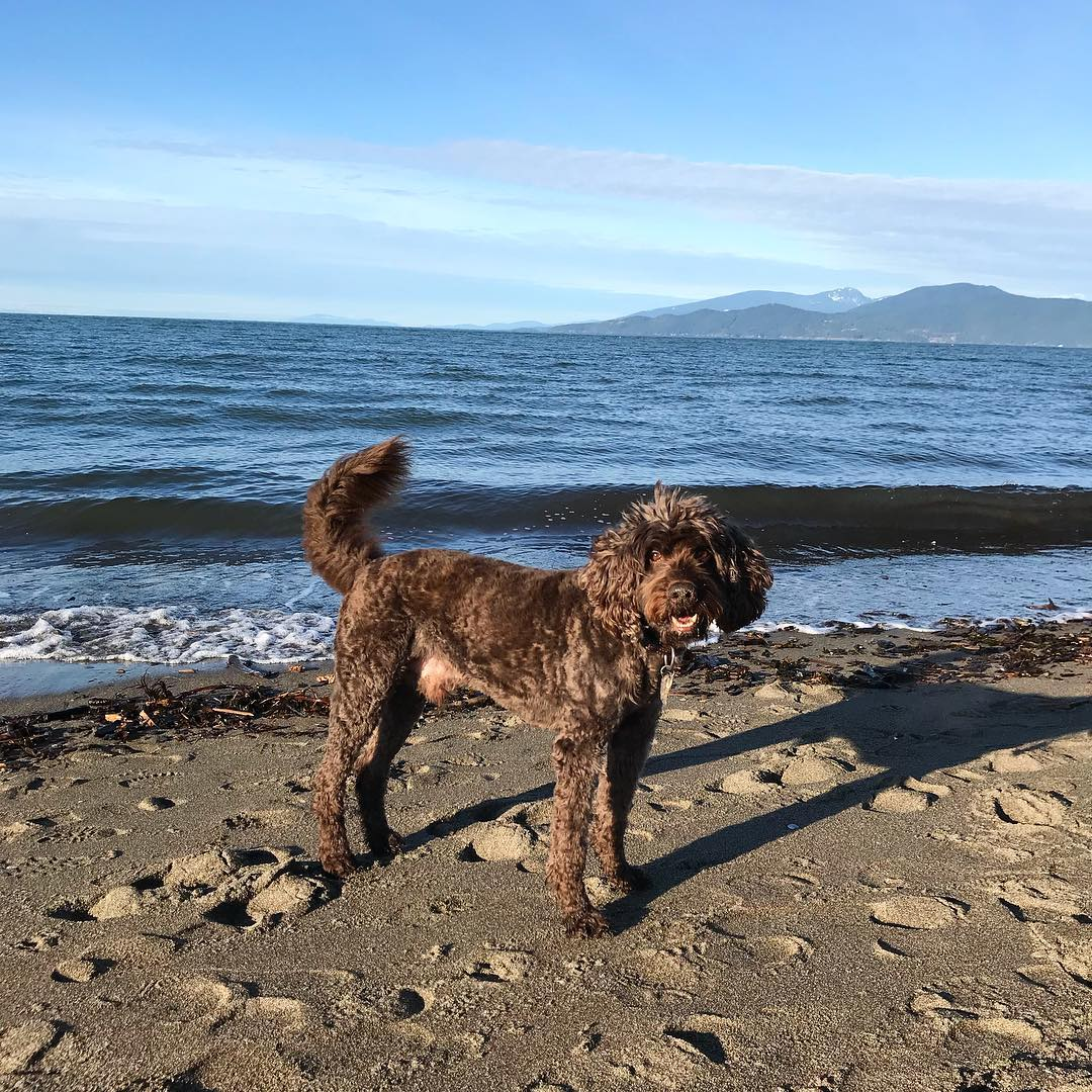 CONNECTION >>> In 2019, Charlie dog resolves to spend more time at the beach, swimming in the ocean, naked! Ditto. ⁣ ⁣ Here's to making tons of time to enjoy every type of #oceanbathing, #forestbathing, and #naturebathing this year! ⁣ ⁣ The benefits of NATURE CONNECTION are myriad, significantly boosting every facet of wellness – from mental health, to physical fitness, to improved sleep and even making better dietary choices. ⁣ ⁣ FUN FACTS:⁣ ✅ spending an hour outside every morning, bathed in natural light, can help you sleep better at night!⁣ ✅ mindfully walking through a forest (even an urban park!) can reduce stress and produce feelings of calm!⁣ ✅ exercising outside (yoga, running, strength training) significantly multiplies the benefits to your mental-physical health and fitness! ⁣