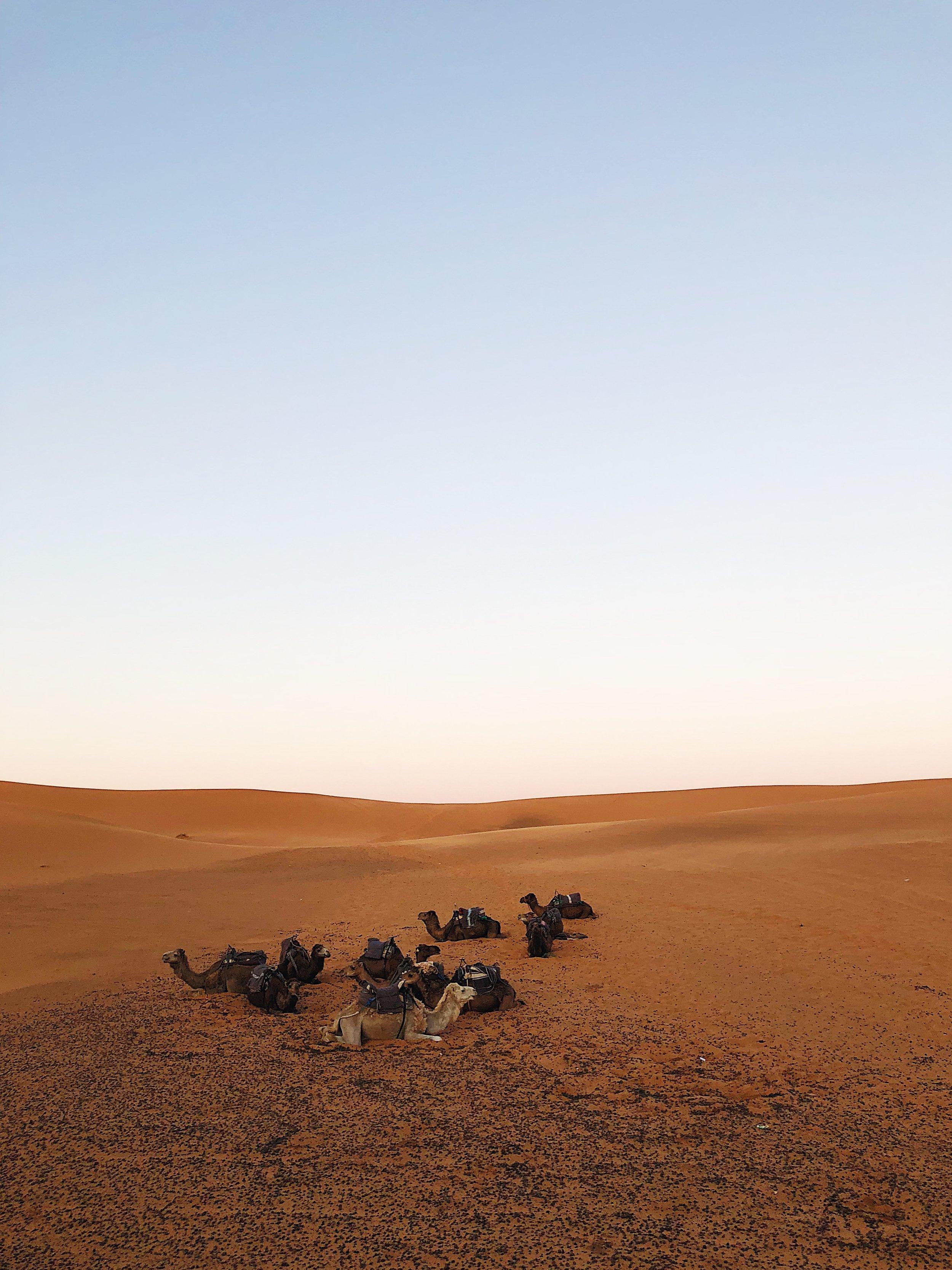 Merzouga, Sahara Desert