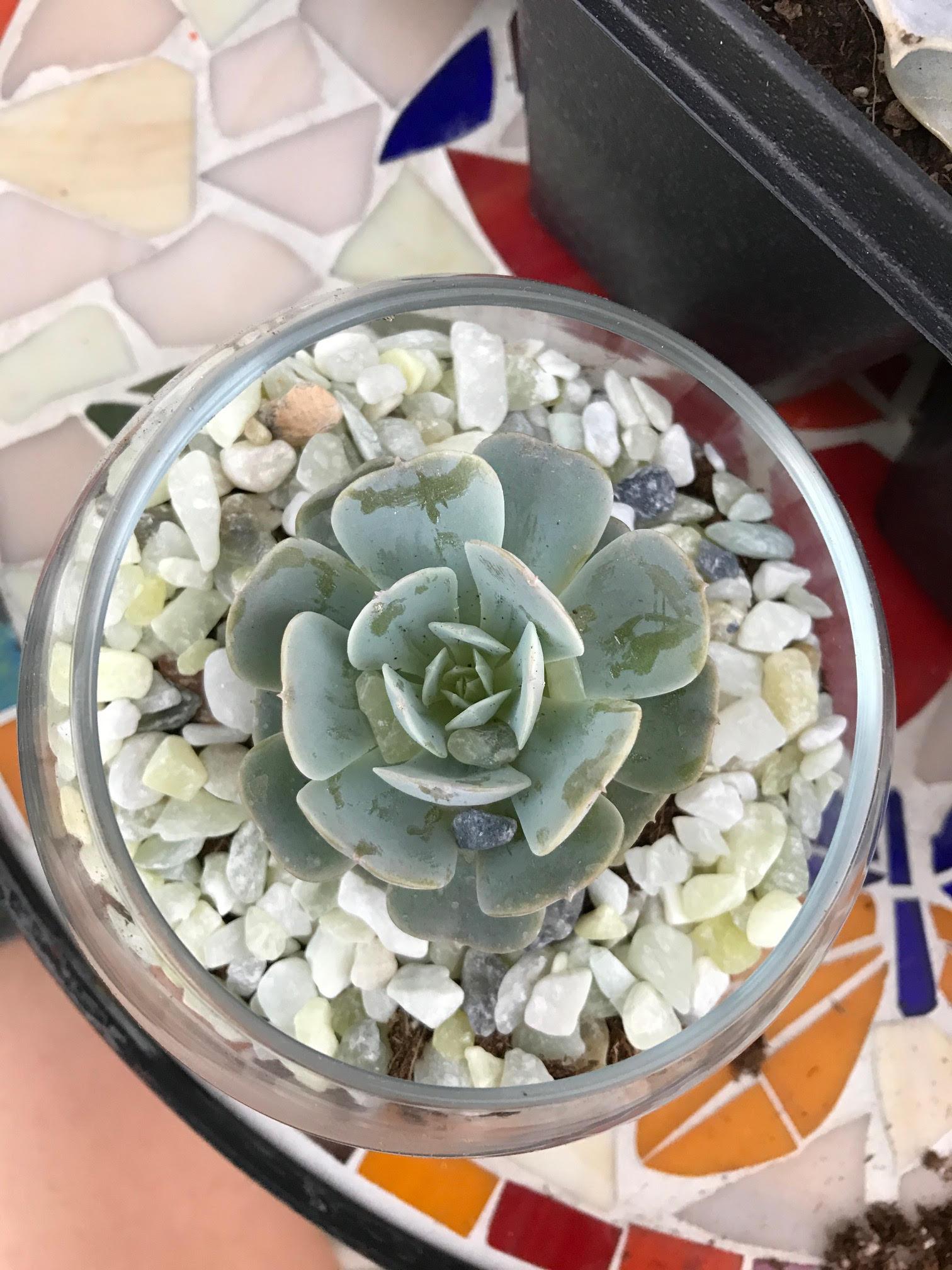 Succulent_Terrarium_DIY.jpg