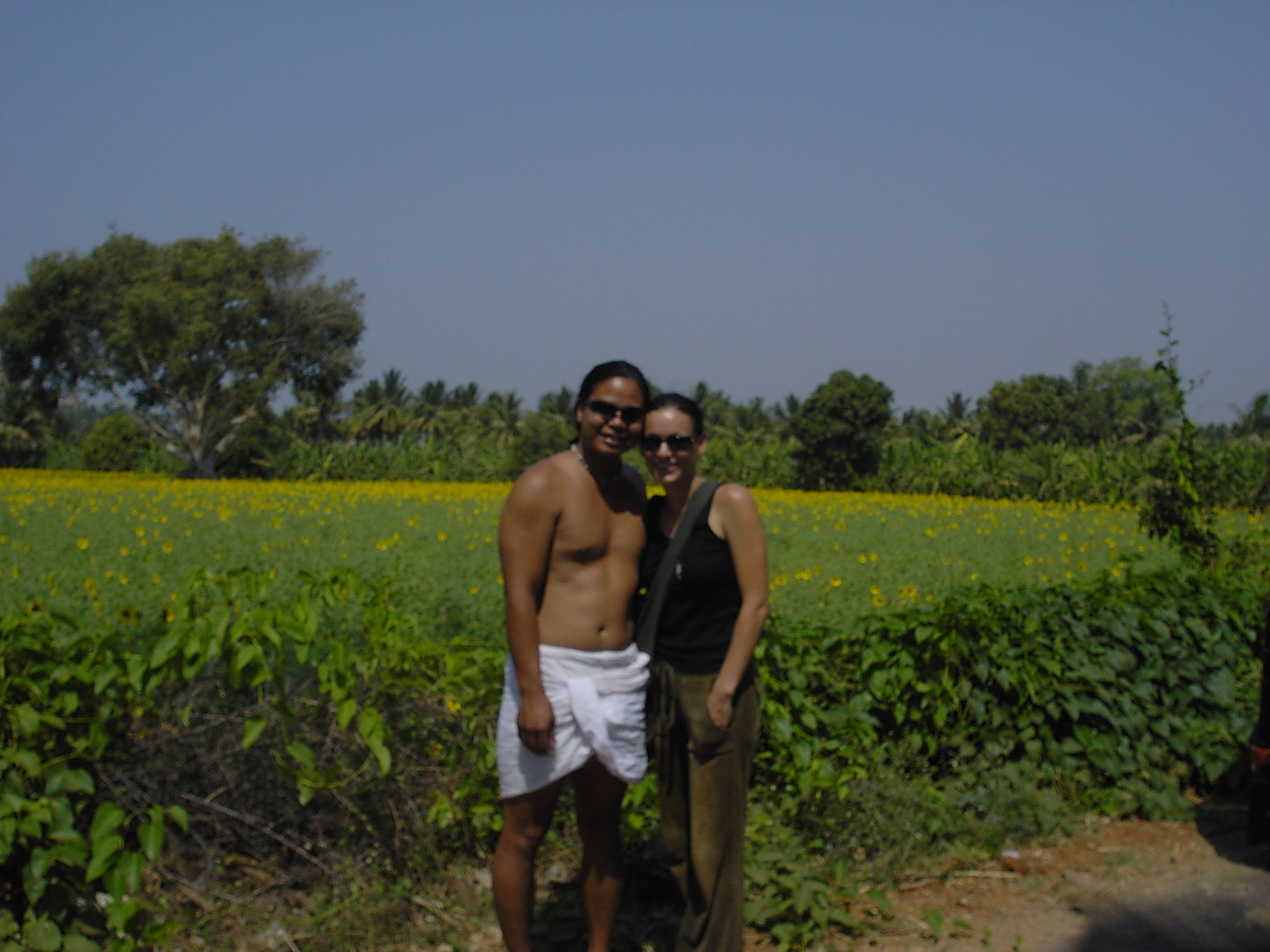 field of sunflowers-Hampi.jpg