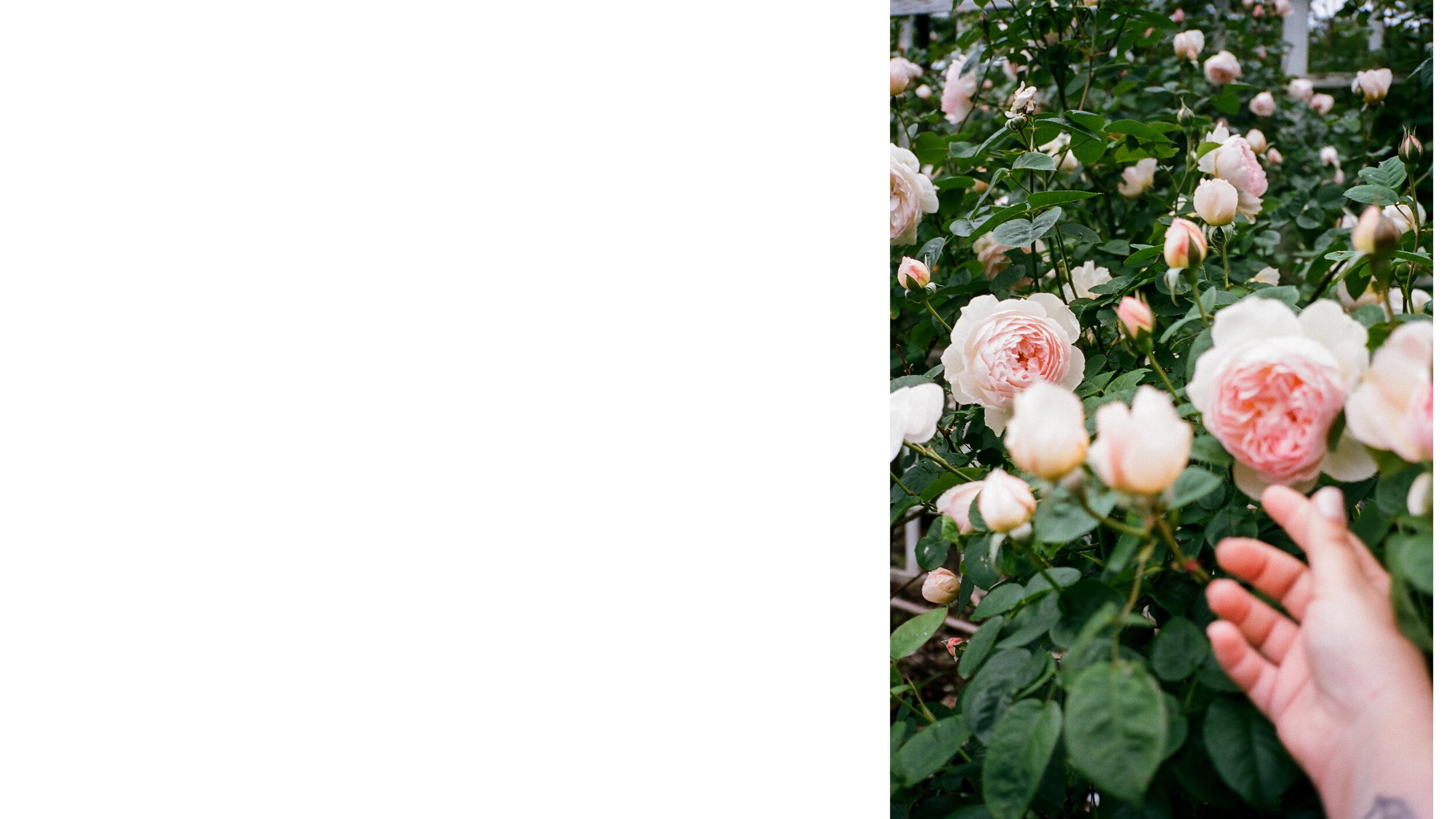 pics-2-2.jpg