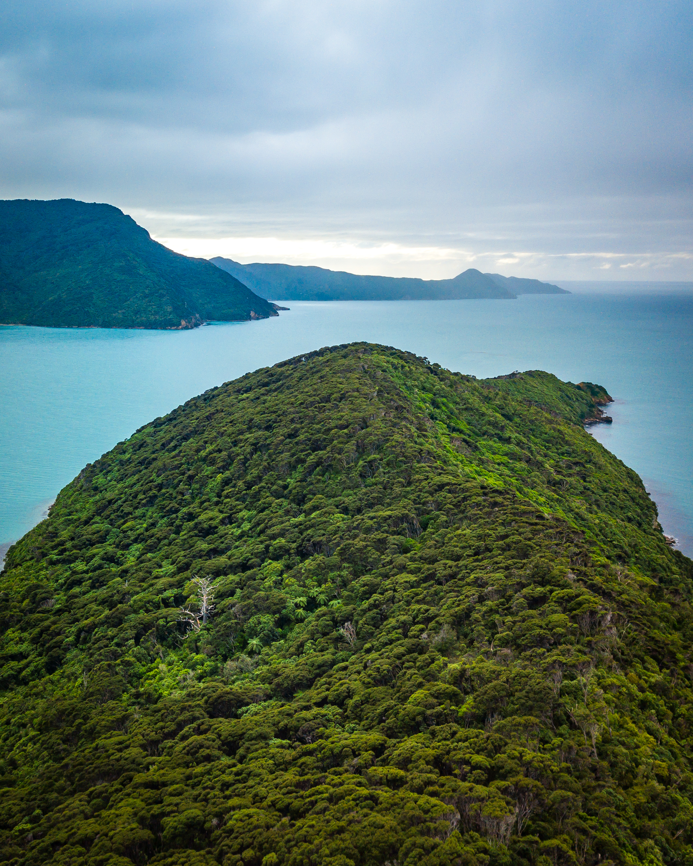 Motuara Island - Marlborough, New Zealand