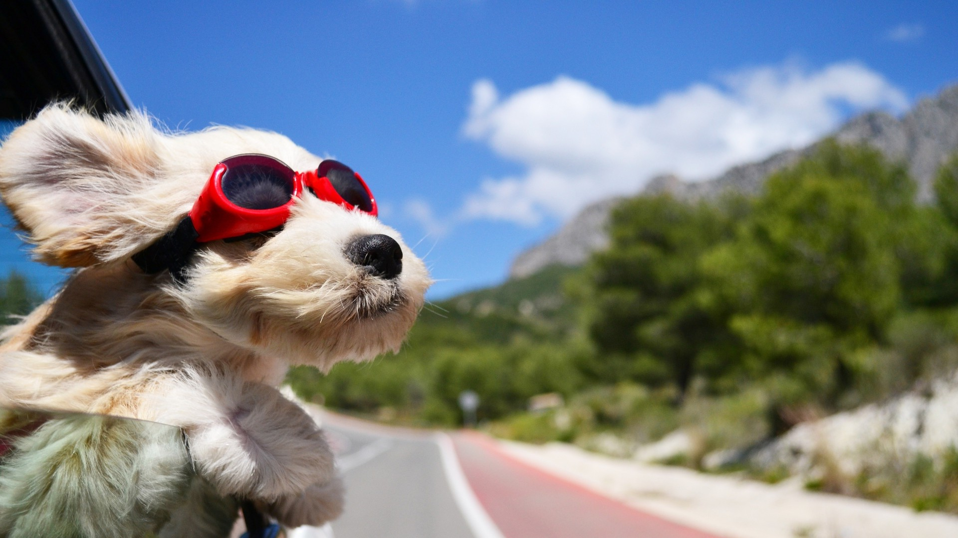 DOG TRANSPORT - $20 PER 30 MINS +$0.80 PER KM