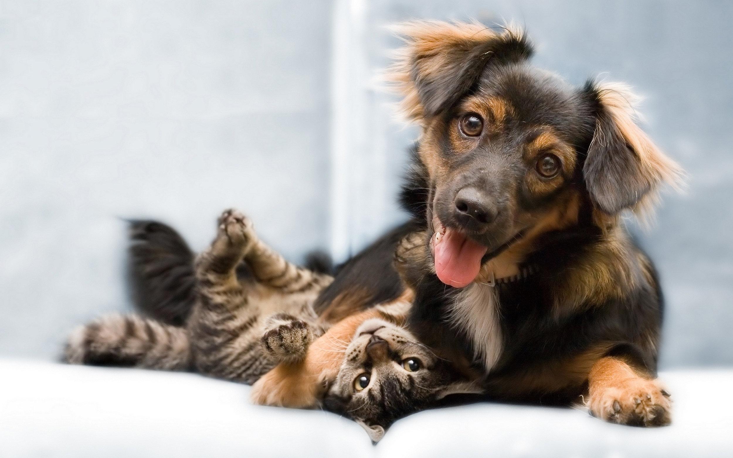 6986681-dog-cat-friends.jpg