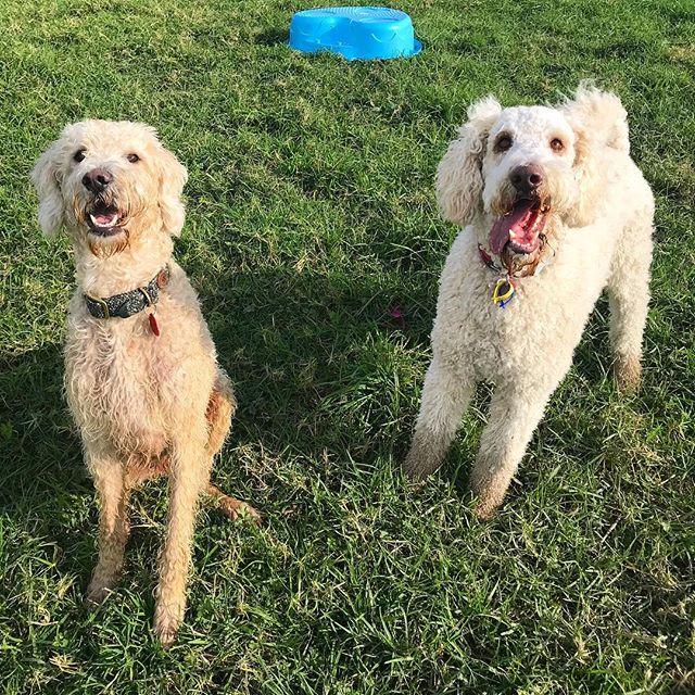 New besties 🐾 - - - #auckland #dogwalker #newzealand #dogsofnewzealand #doggiedaycare #daycare #nzdog #nzdogs #nzdogsoninstagram #aucklanddogs #dogsofnz  #dogsofauckland #doglover #instadog #dogoftheday #dog #dogs #dogstagram #westauckland #aucklandcity #dogwalking #4leggedfun #adventure #aucklanddogwalker #specialisedinsmallpackwalks #individualoneononewalks #bushwalks #beachwalks