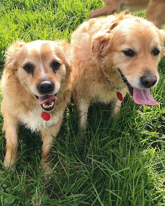 New crew members 🐾🎉 Zoe & Zena 💕 - - - #auckland #dogwalker #newzealand #dogsofnewzealand #doggiedaycare #daycare #nzdog #nzdogs #nzdogsoninstagram #aucklanddogs #dogsofnz  #dogsofauckland #doglover #instadog #dogoftheday #dog #dogs #dogstagram #westauckland #aucklandcity #dogwalking #4leggedfun #adventure #aucklanddogwalker #specialisedinsmallpackwalks #individualoneononewalks #bushwalks #beachwalks