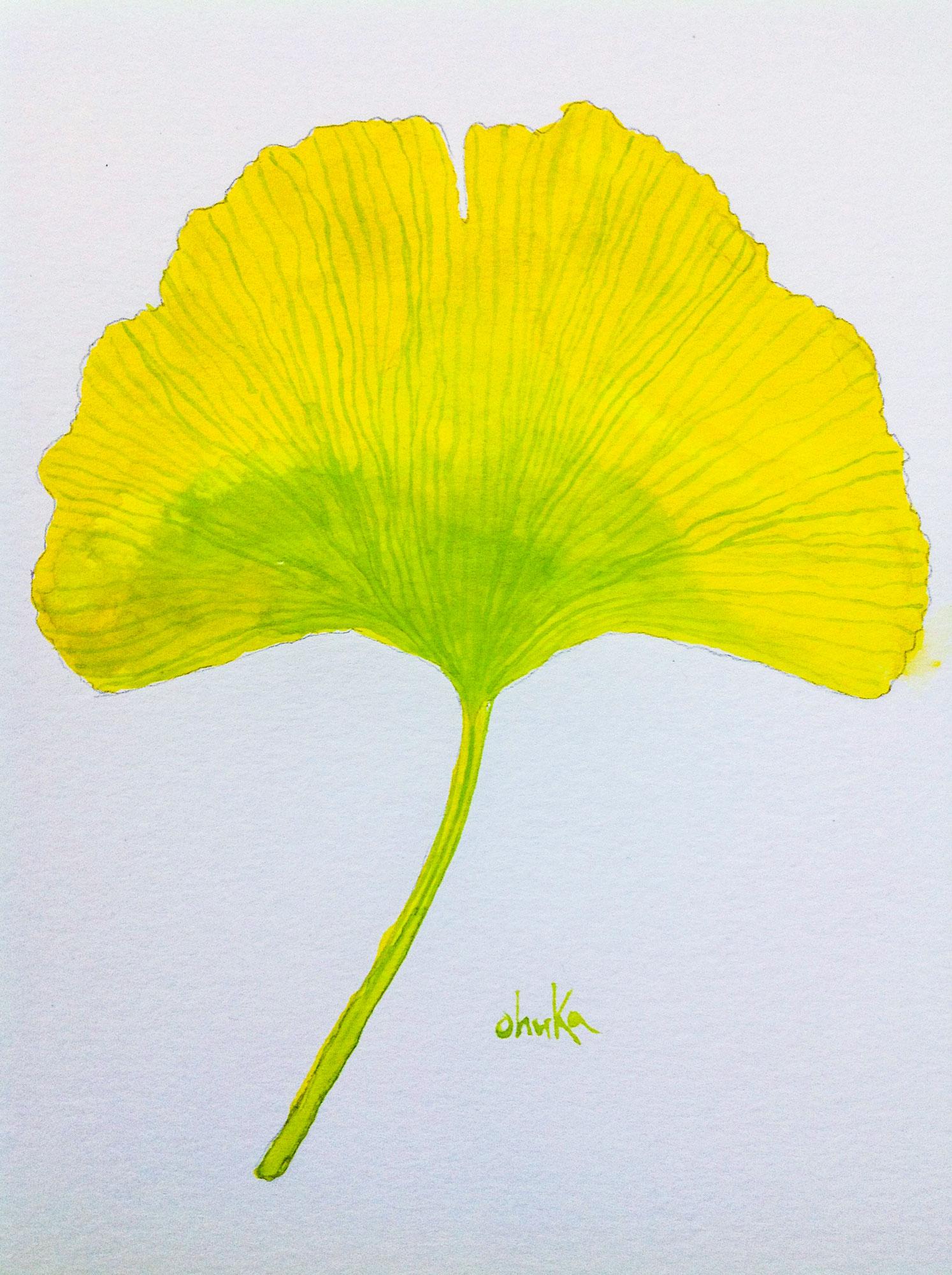 gingko-leaf.jpg
