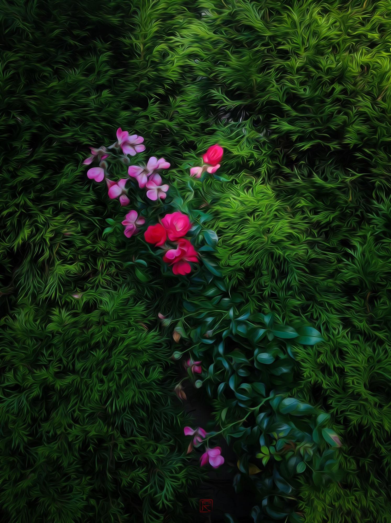 Summer_Red_IMG_1688.jpg