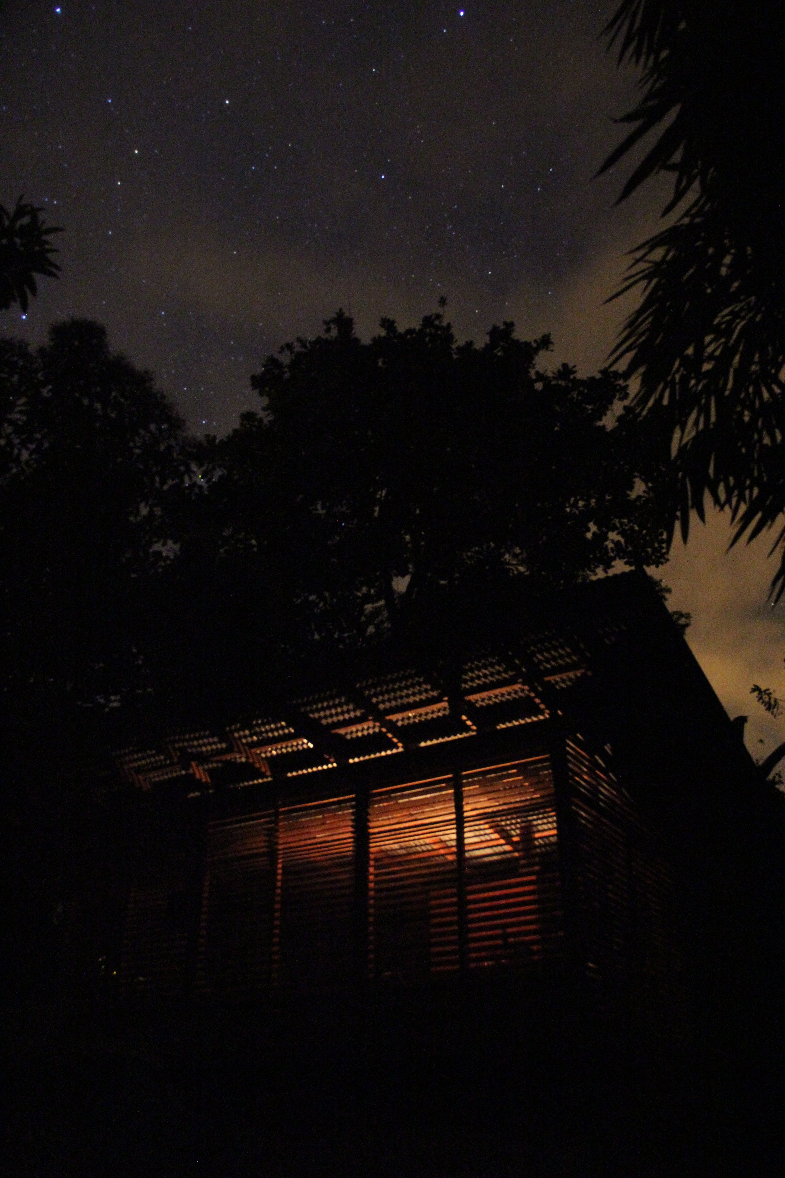 Jungle Blind_ Night view