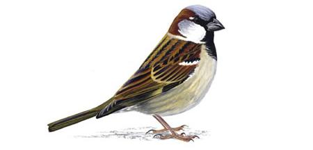 slider2-bird.jpg