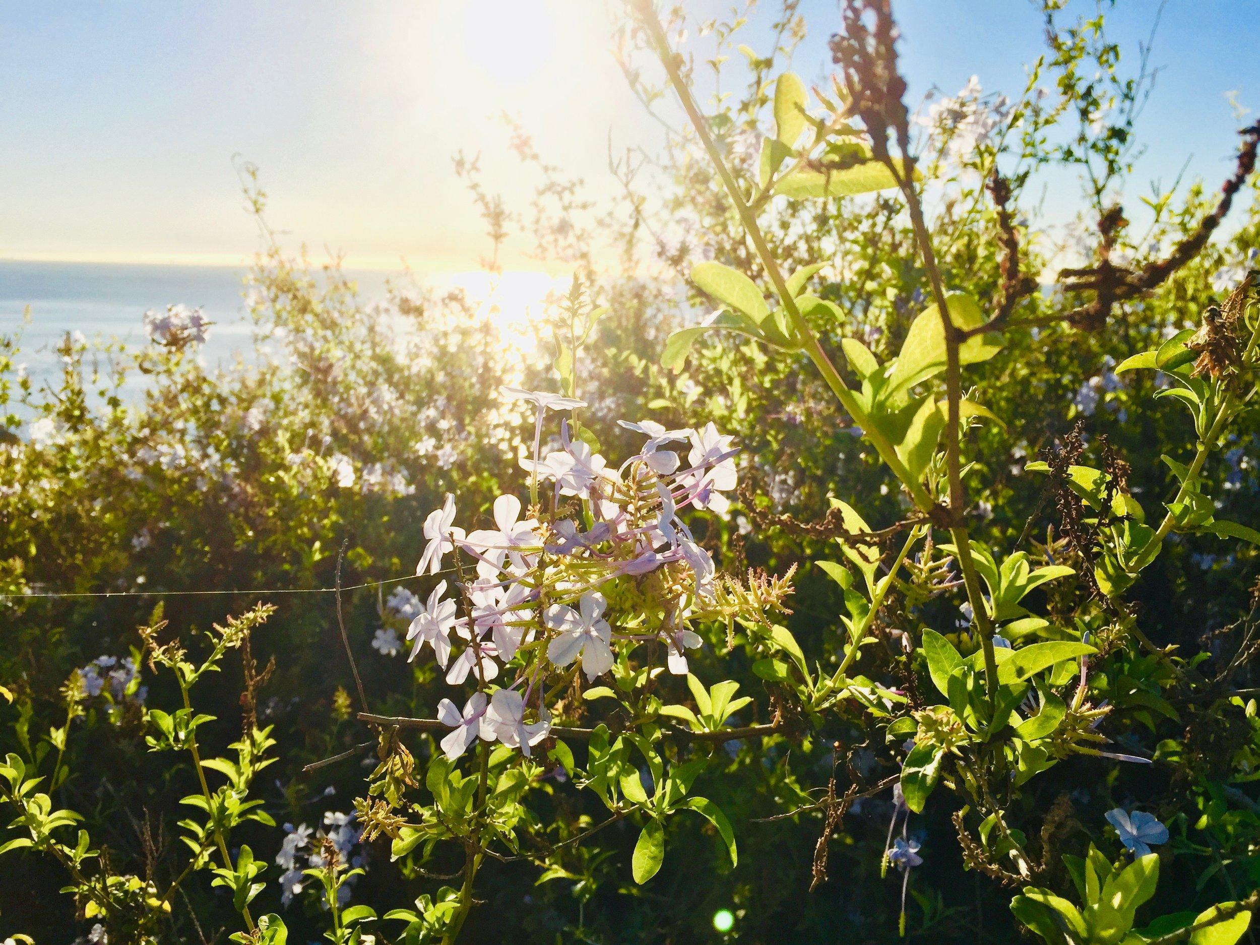 Flower and Sunrise