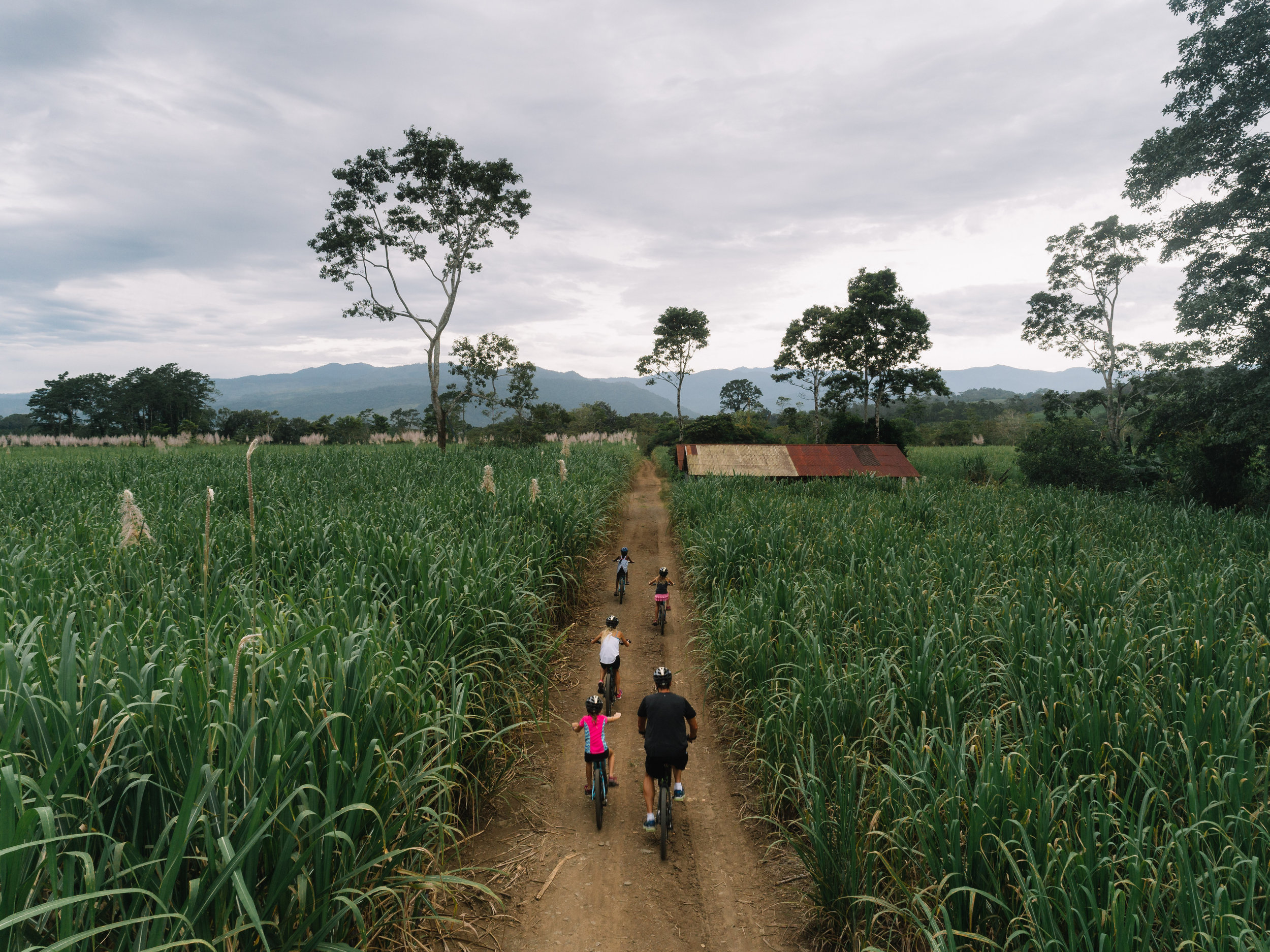 Half way thru our 8km bicycle ride in Turrialba, Costa Rica, we came across more than 50 acres of beautiful sugar cane fields. We managed to navigate our way out of this maze, just before the sun set.