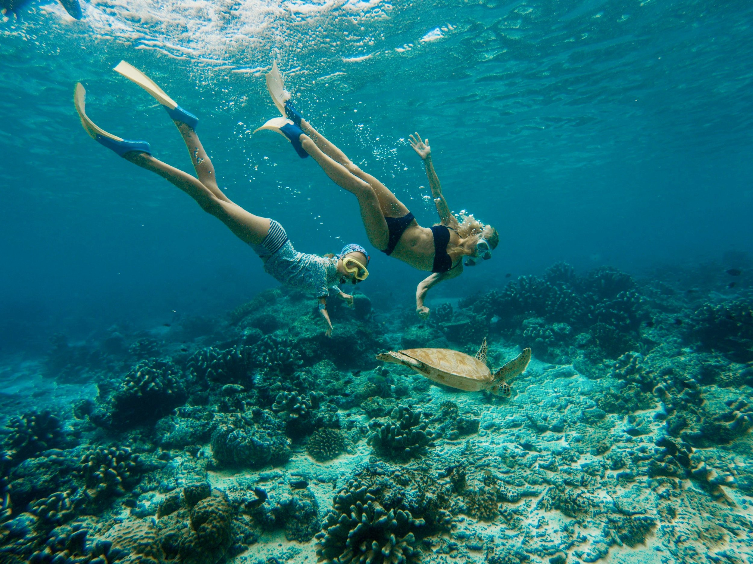 Mom and daughter date underwater in Malaysia. During our travels, we have fallen in love with the ocean and the underwater world. By far, our favorite is the sea turtle, which we were fortunate enough to spot in the beautiful waters of the Perhentian Islands. These 2 free divers make it look easy going down to depths of 15-20 feet, to get a closer view of the beautiful marine life.
