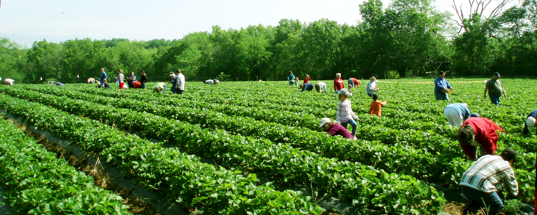 wohletz-berry-farm.jpg