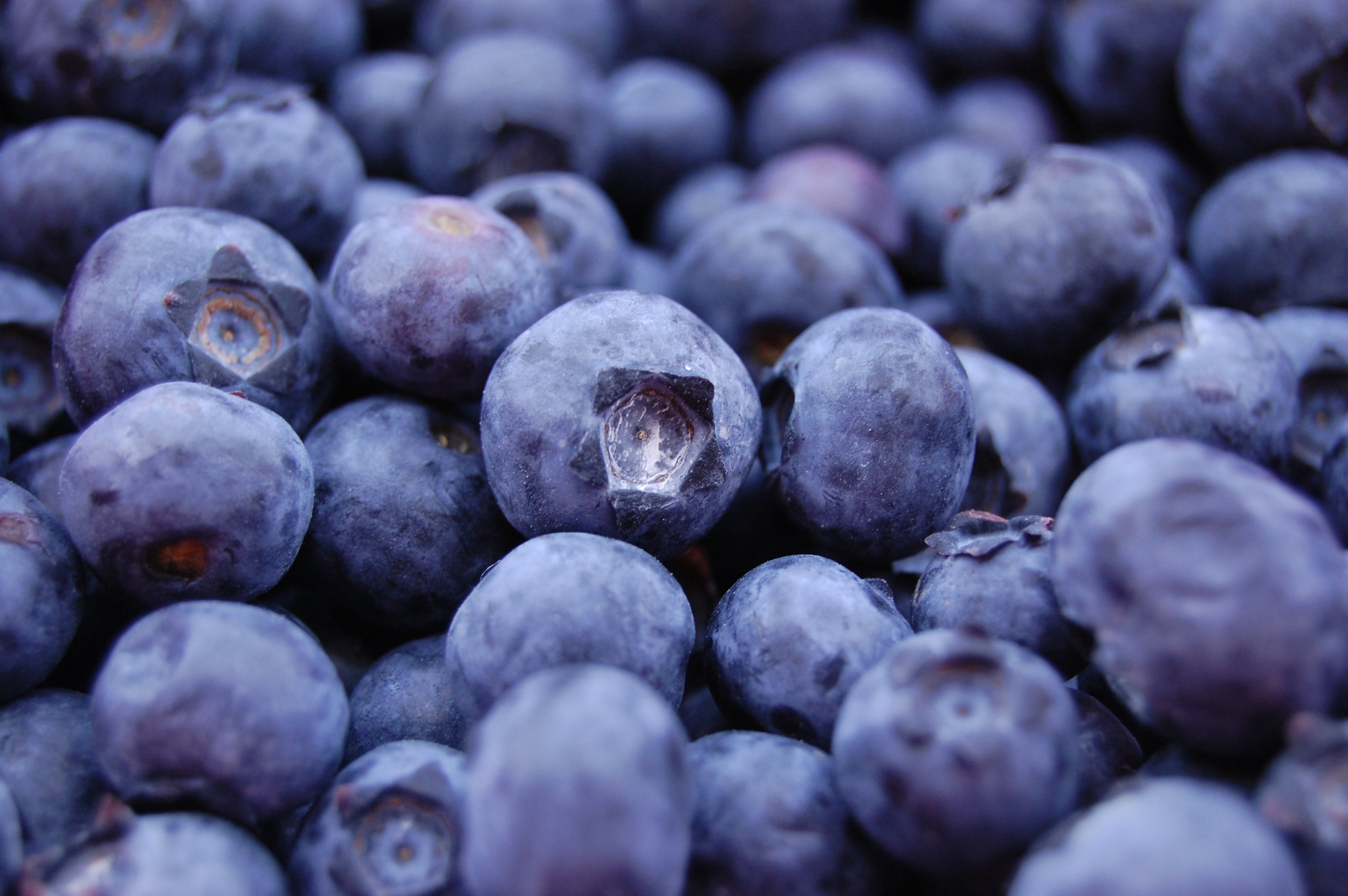 Sign up for our BLUEBERRY SEASON mailing list!