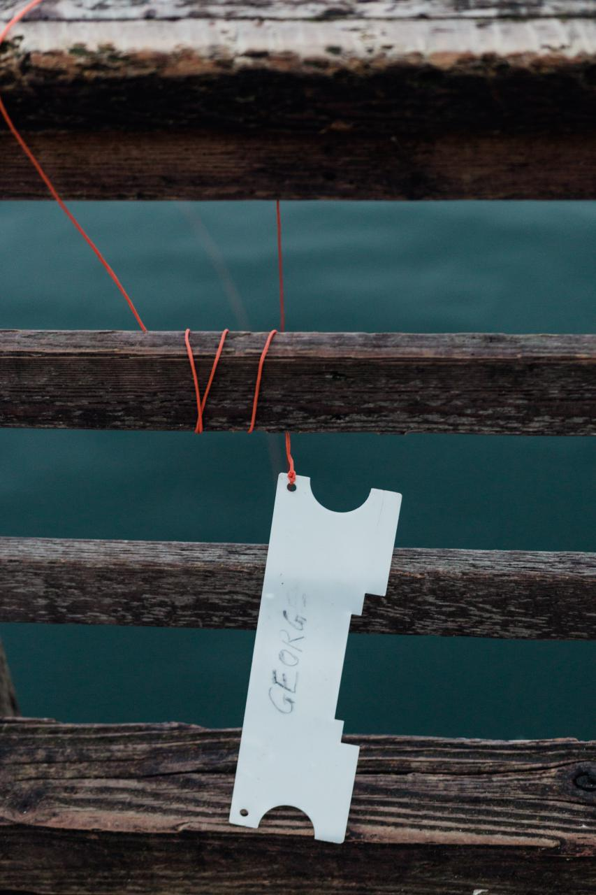Crab-fishing-Ambleside-Park-4.jpg