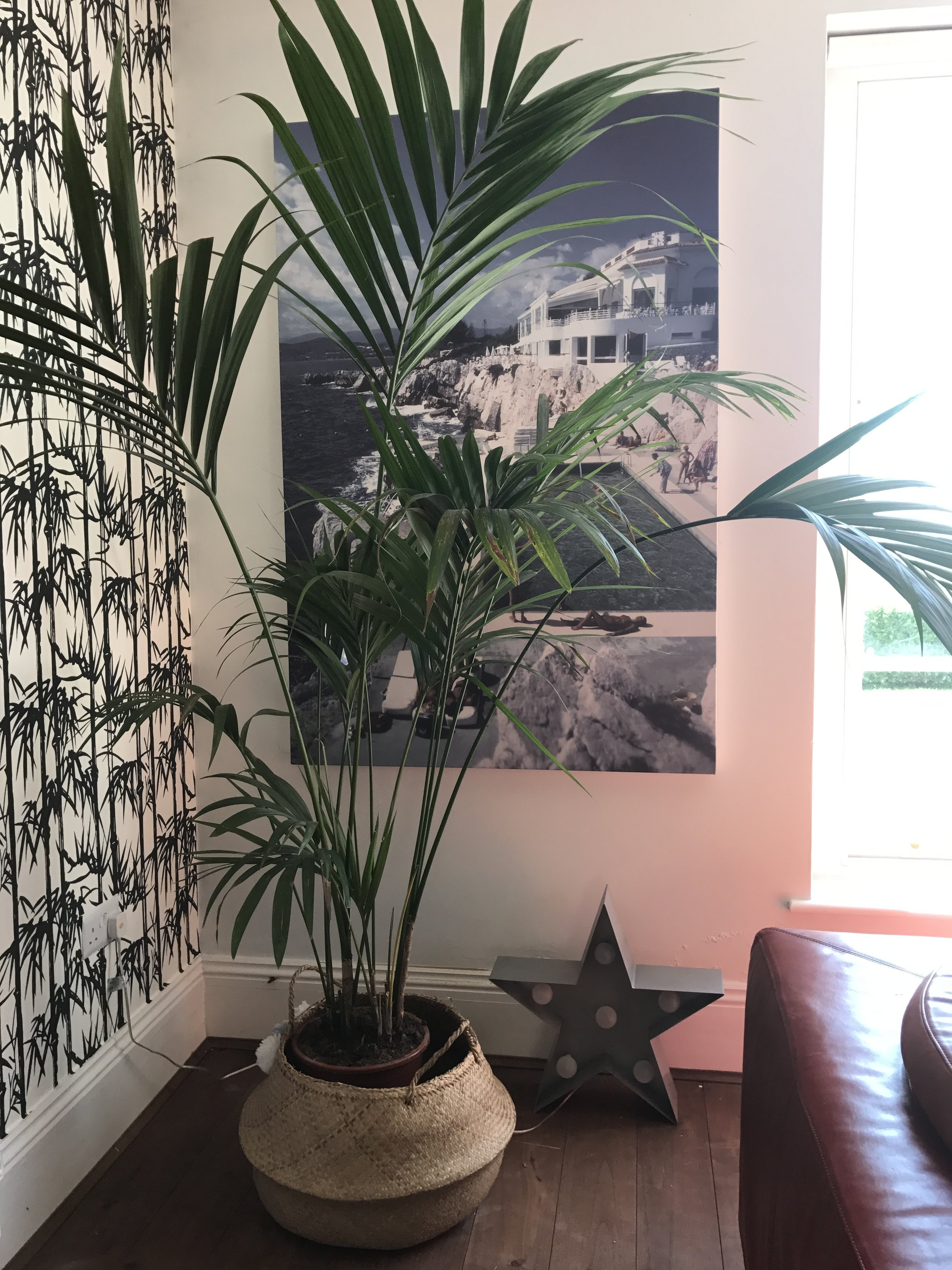 LOVE this palm. Really hope I can keep it alive.