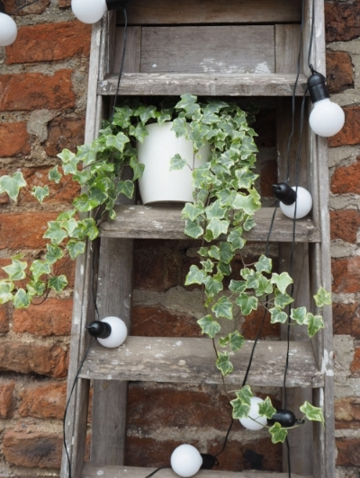 Old stepladders are perfect for festoons and plants.