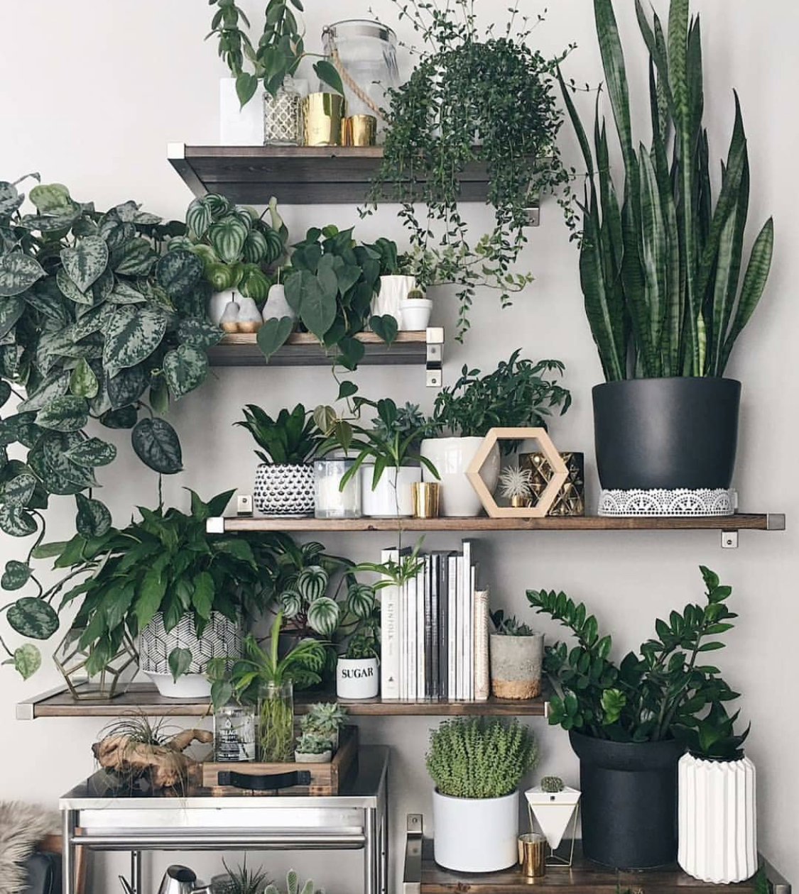 A perfect plant situation.  Photograph via Instagram  @melissamlo .
