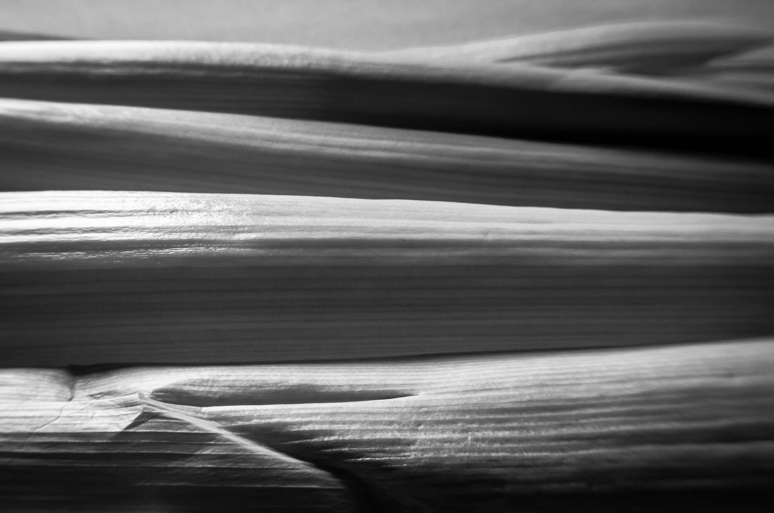 Constructed landscape #5  Deconstructed crumpled Leek and a Lensbaby.