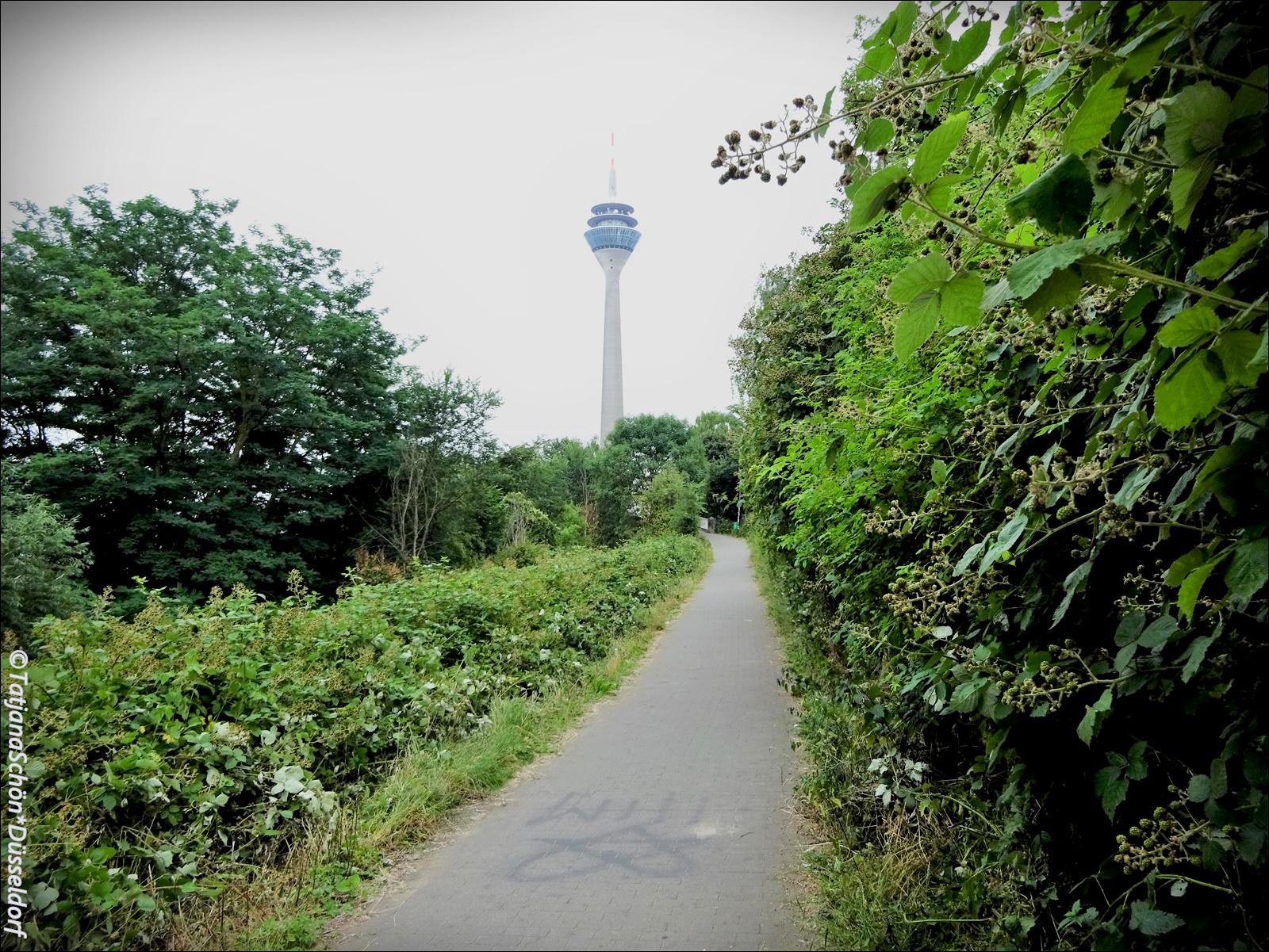 Вид на дюссельдорфскую телебашню с тропинки, которую знаю только я :-)