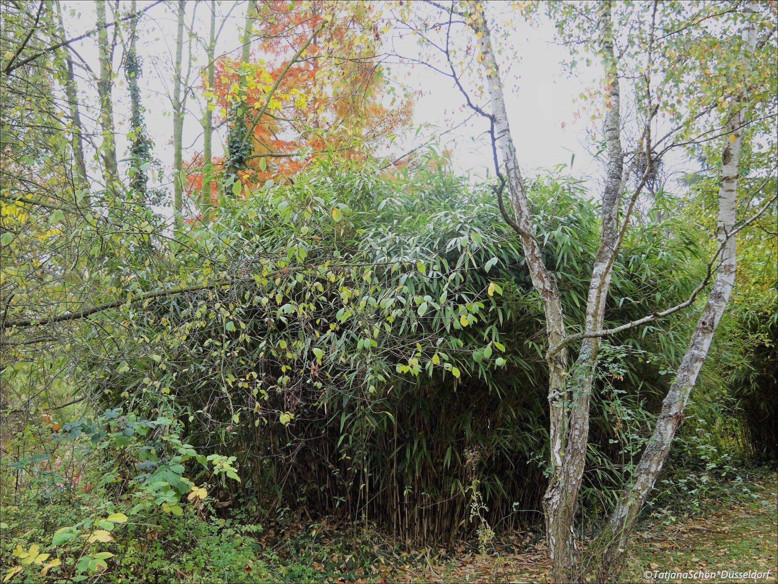 2008-10-1055.JPG