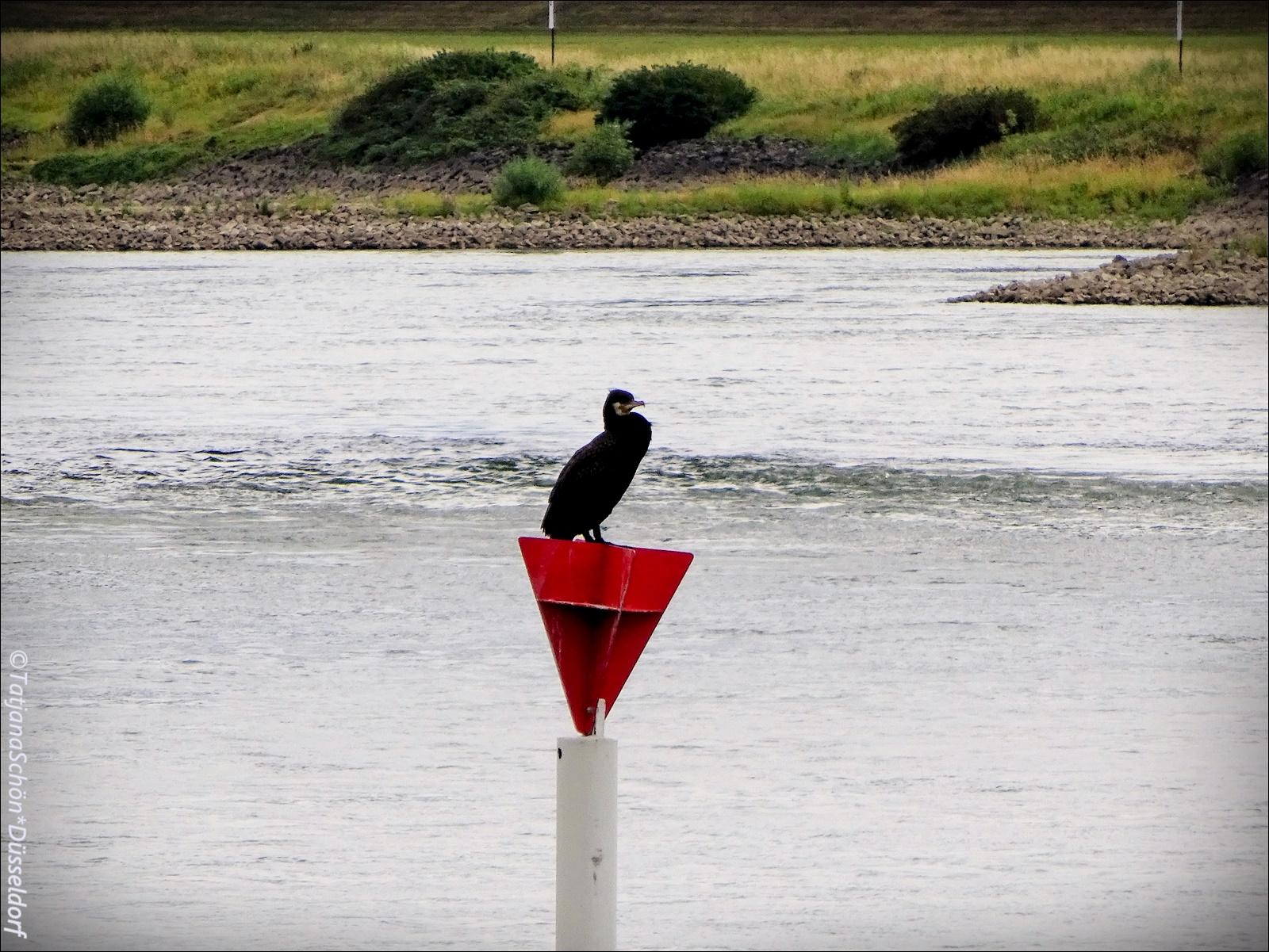 Сесть на берегу и смотреть за Рейном…