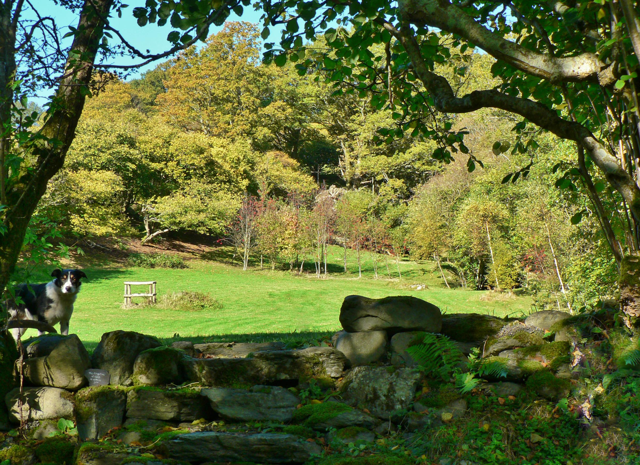 meadow top field 1012.jpg