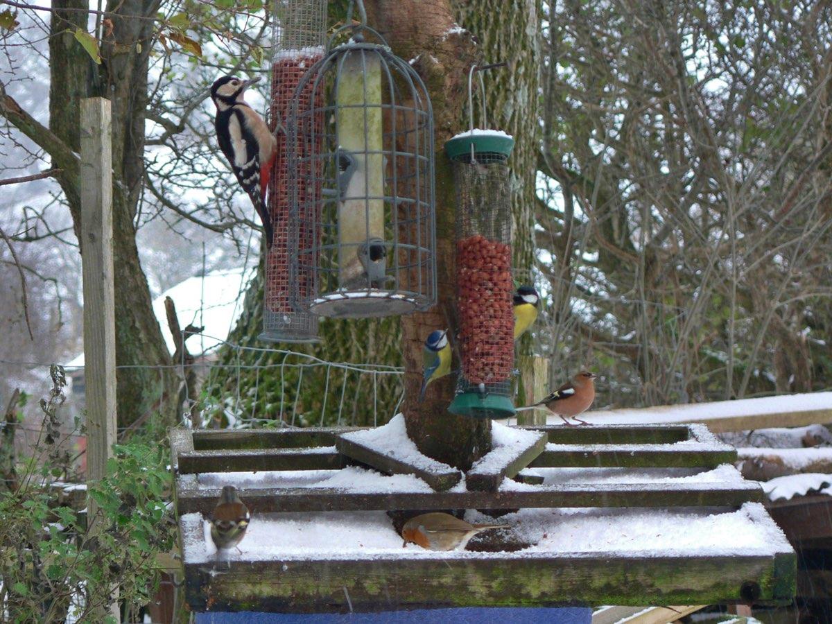 birds feeder 1108.jpg