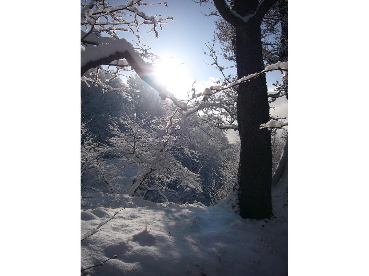 snow sun 0110.jpg