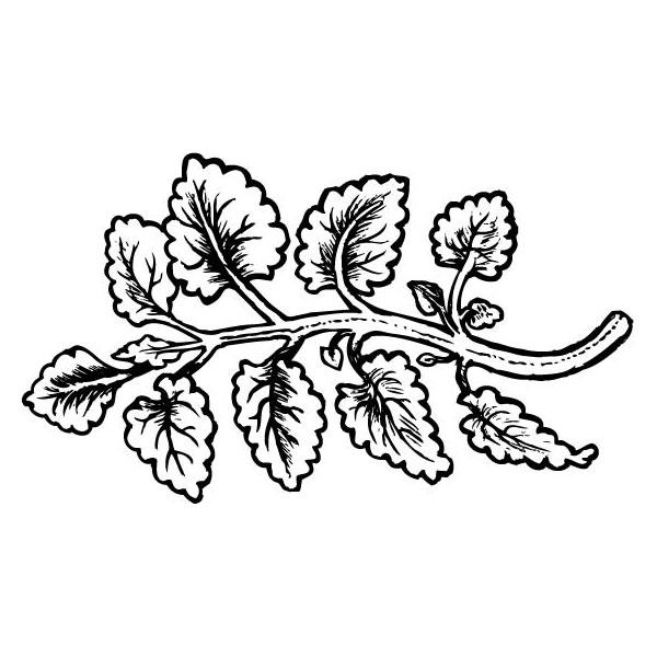 Citronmeliss
