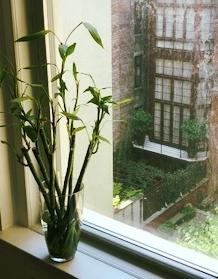 bamboo in window 2.jpg